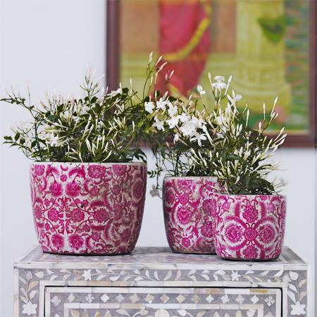Pinkpots